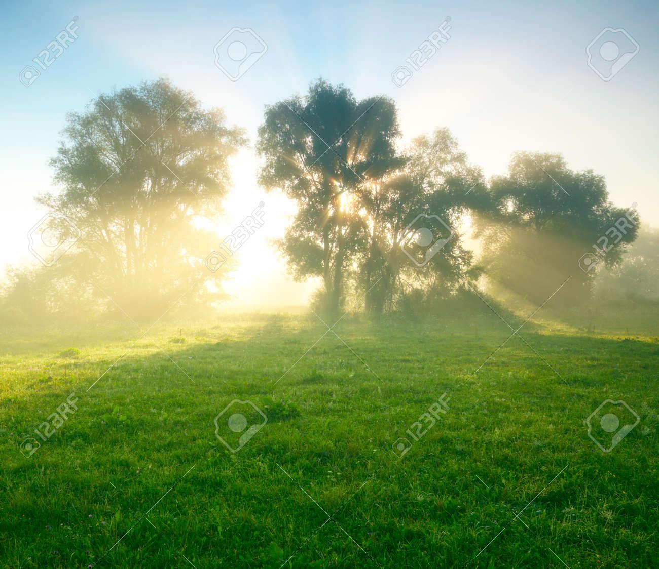 Foggy meadow at sunrise Stock Photo - 13698881