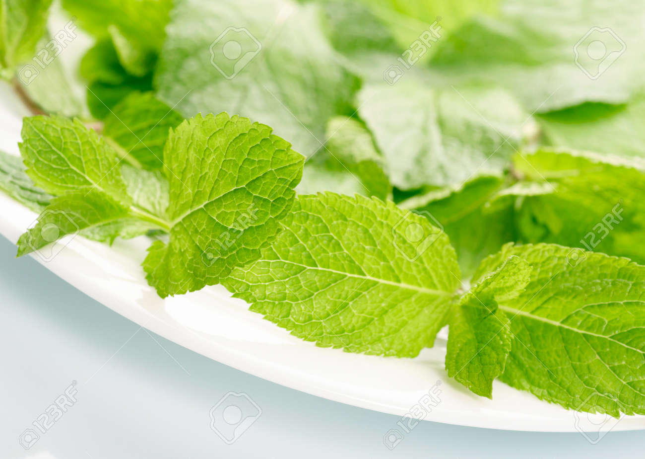 Fresh mint Stock Photo - 13698571