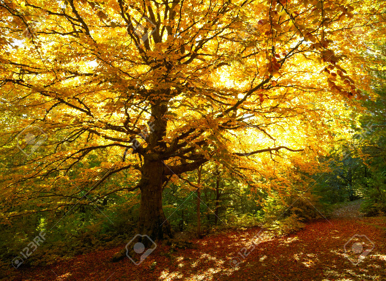 Autumn tree Stock Photo - 23139565
