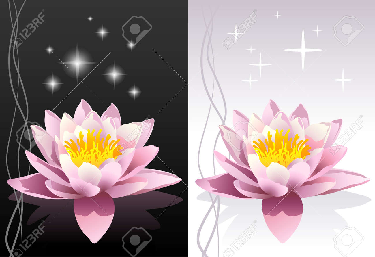 detailed vector lotus flower with reflection on black and white abstract oriental backgrounds Stock Vector - 6318847