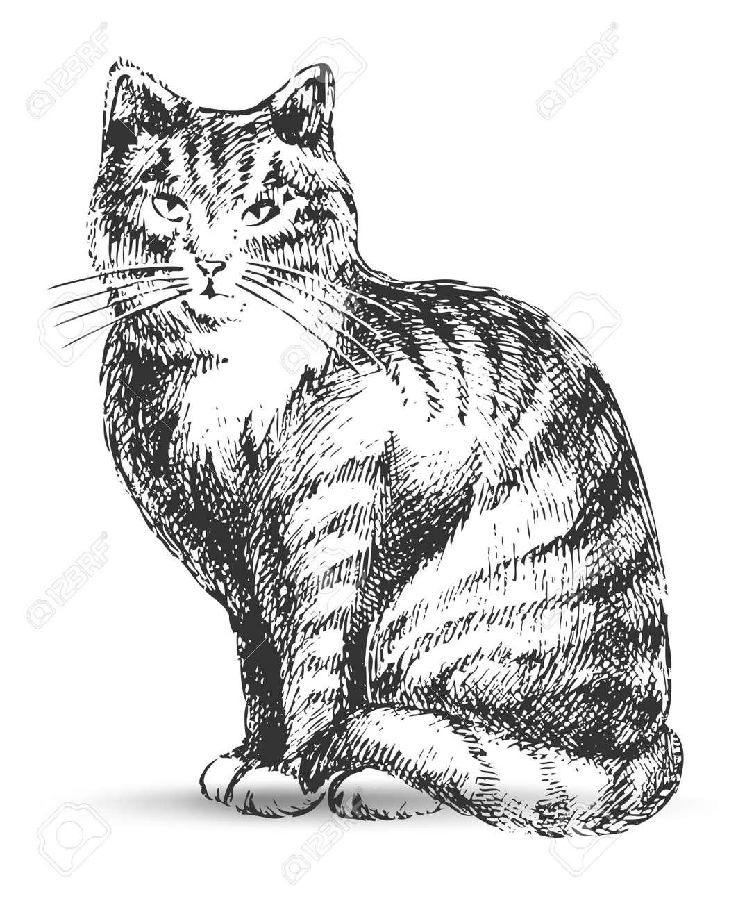 cat drawing Stock Vector - 7860198