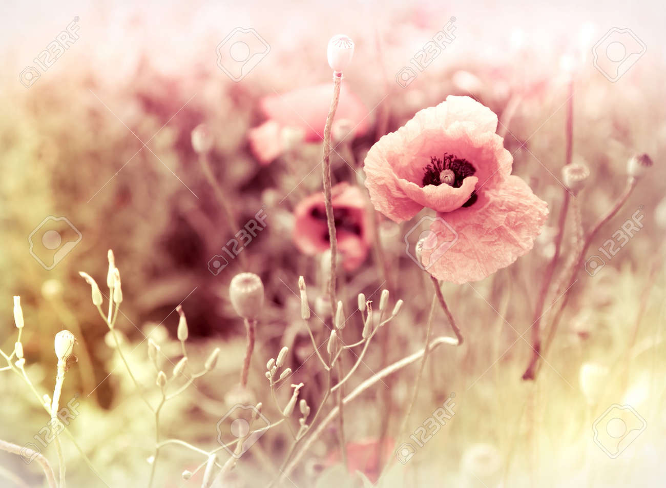 morning flowers meadow - vintage photo background Stock Photo - 10059076