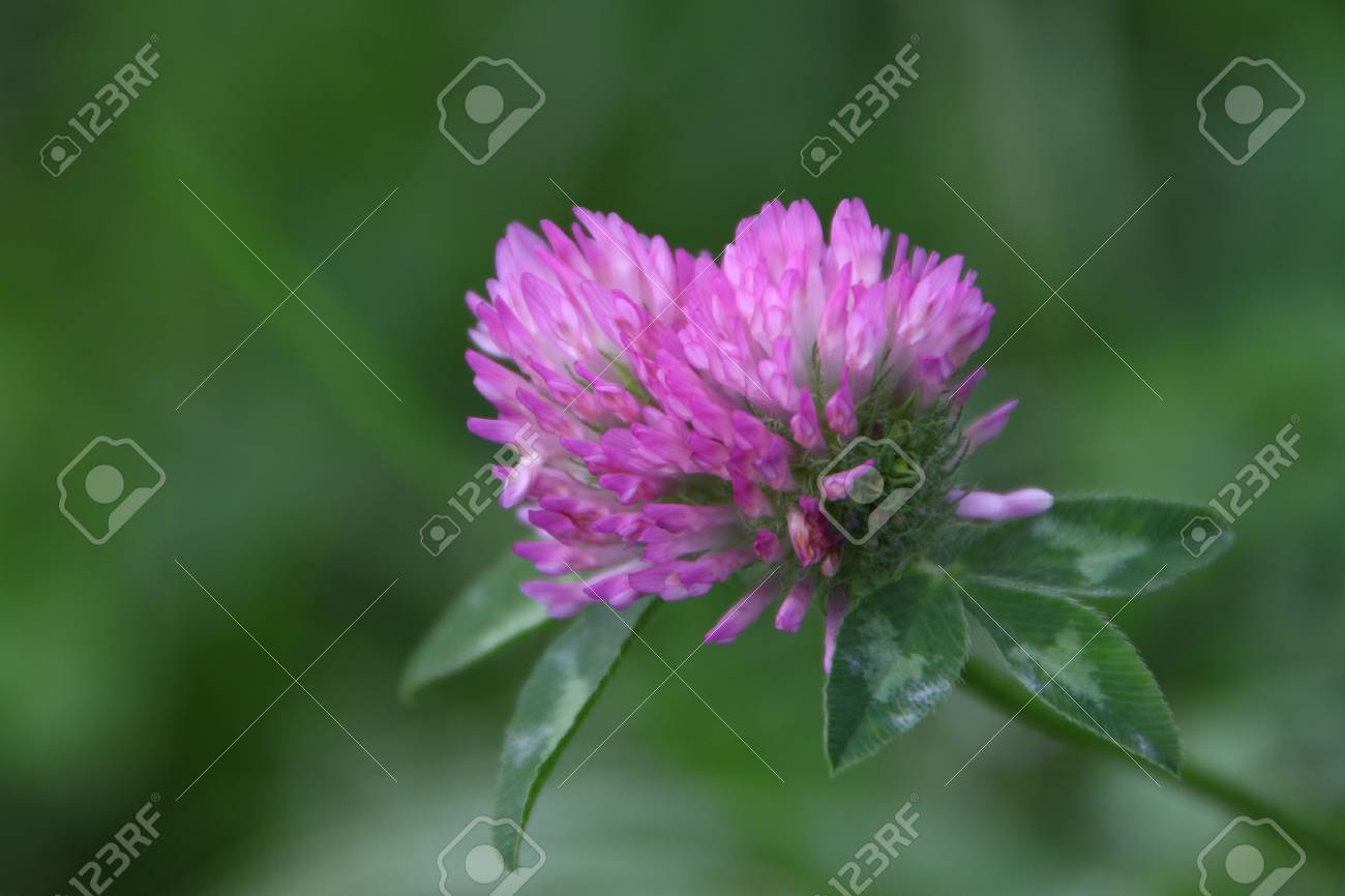 flower Stock Photo - 24252962