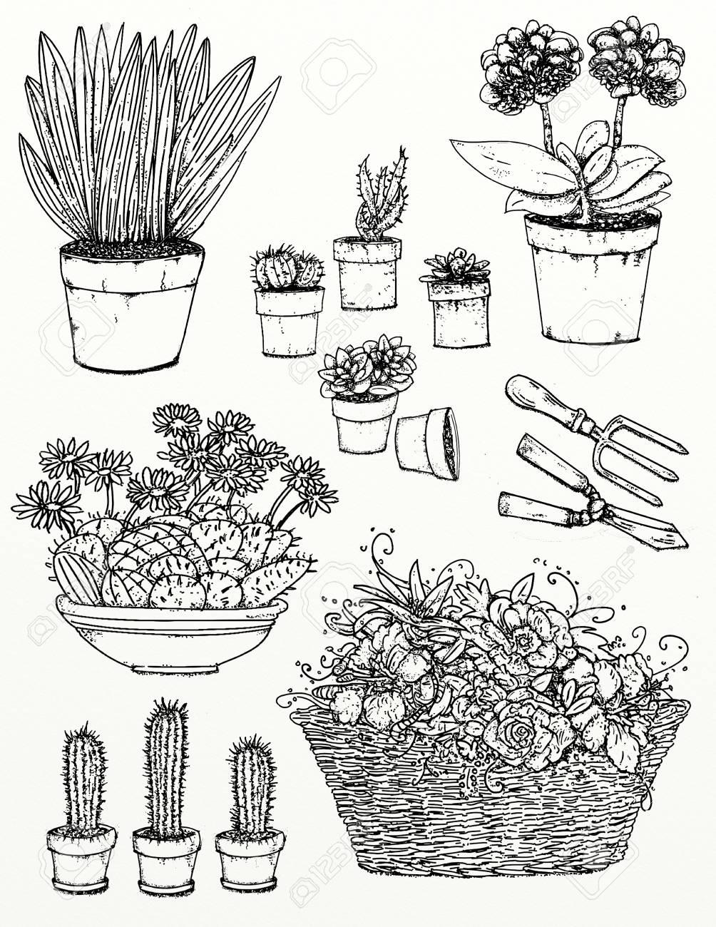 Dibujos Realistas De Plantas Y Jardines Flores De Jardin Plantas
