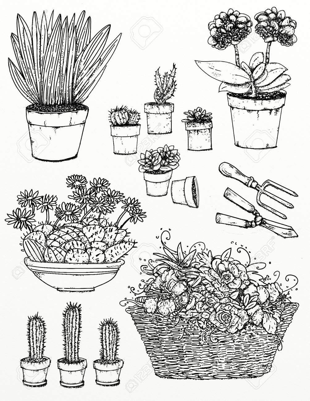 Realistic Drawings Of Plants And Gardens Garden Flowers Plants