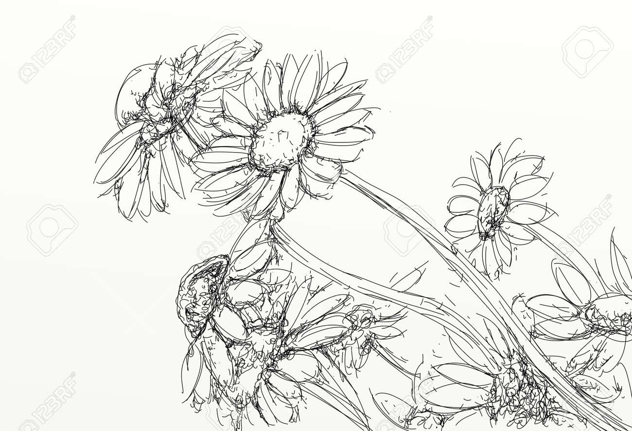 A Daisies Realistic Drawings Of Flowers Stock Photo Picture And Royalty Free Image Image 103434332