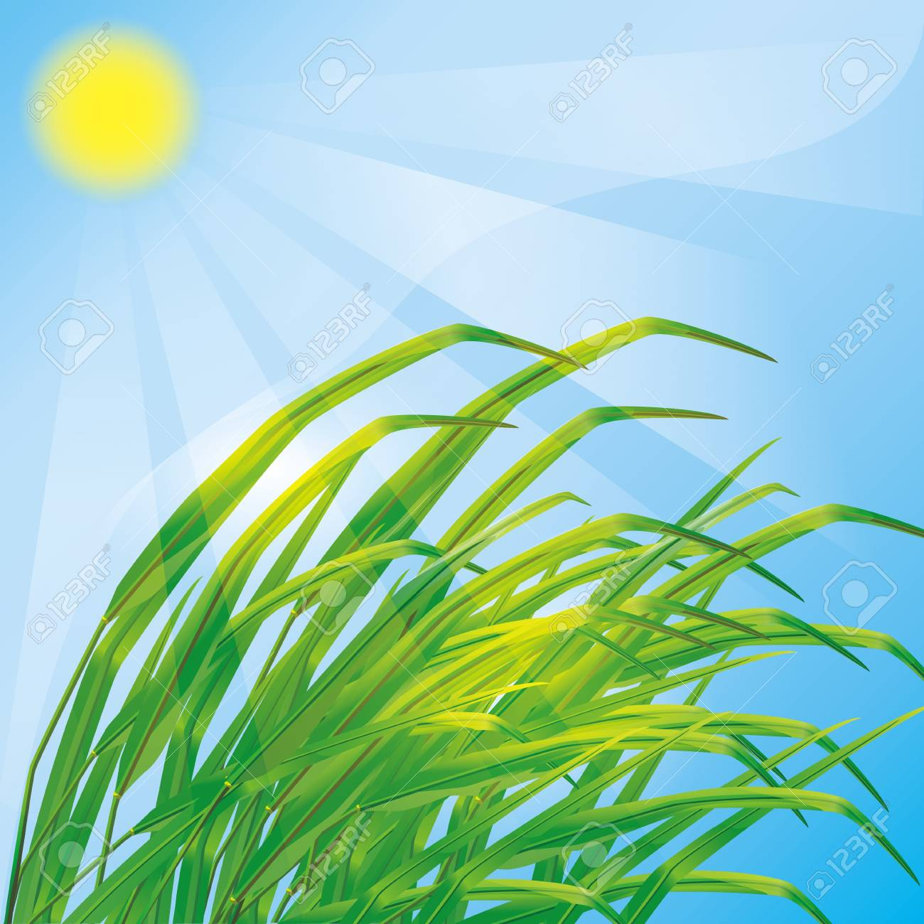 Spring eco background with fresh green grass and sun Stock Vector - 12482363