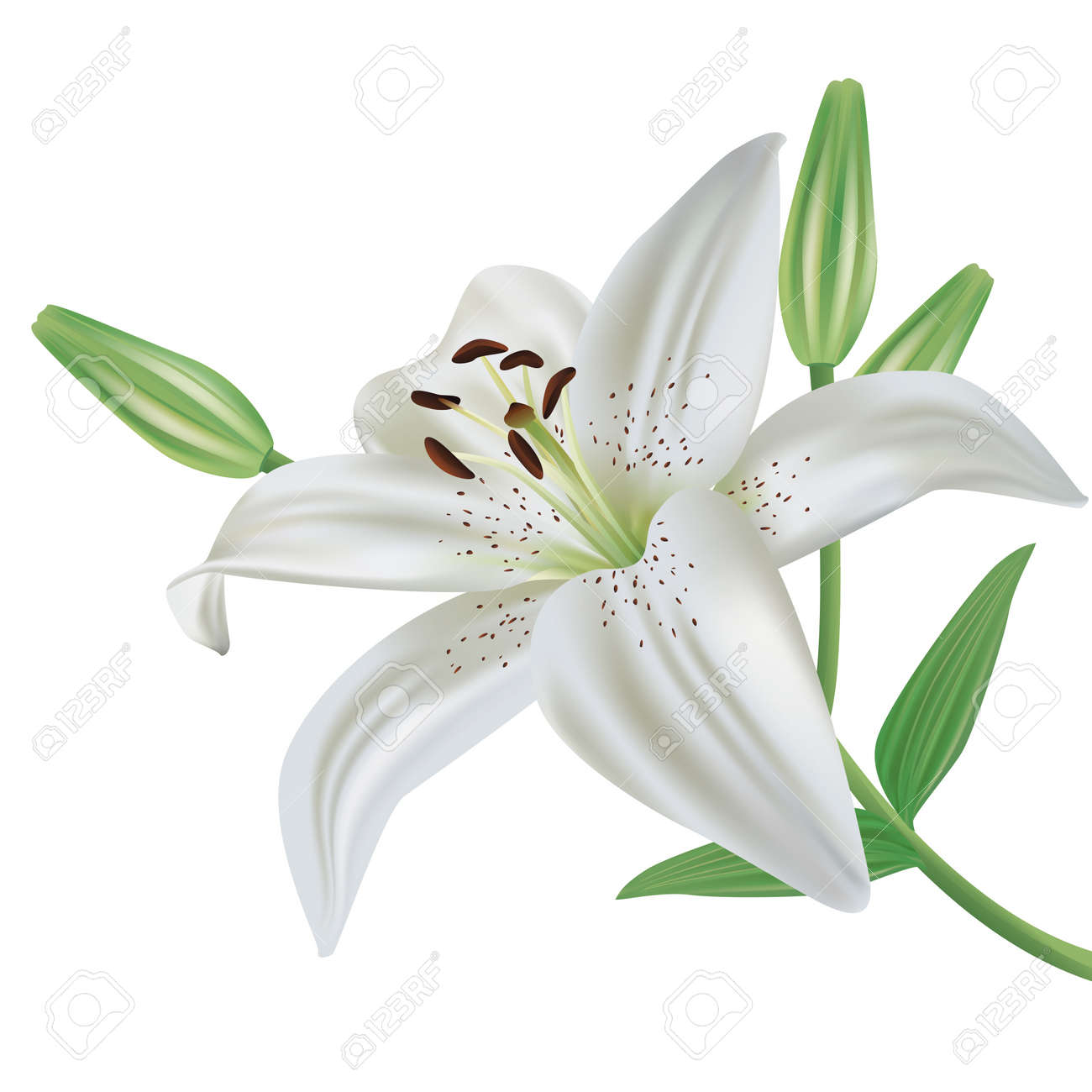 38894 Lily Flower Cliparts Stock Vector And Royalty Free Lily