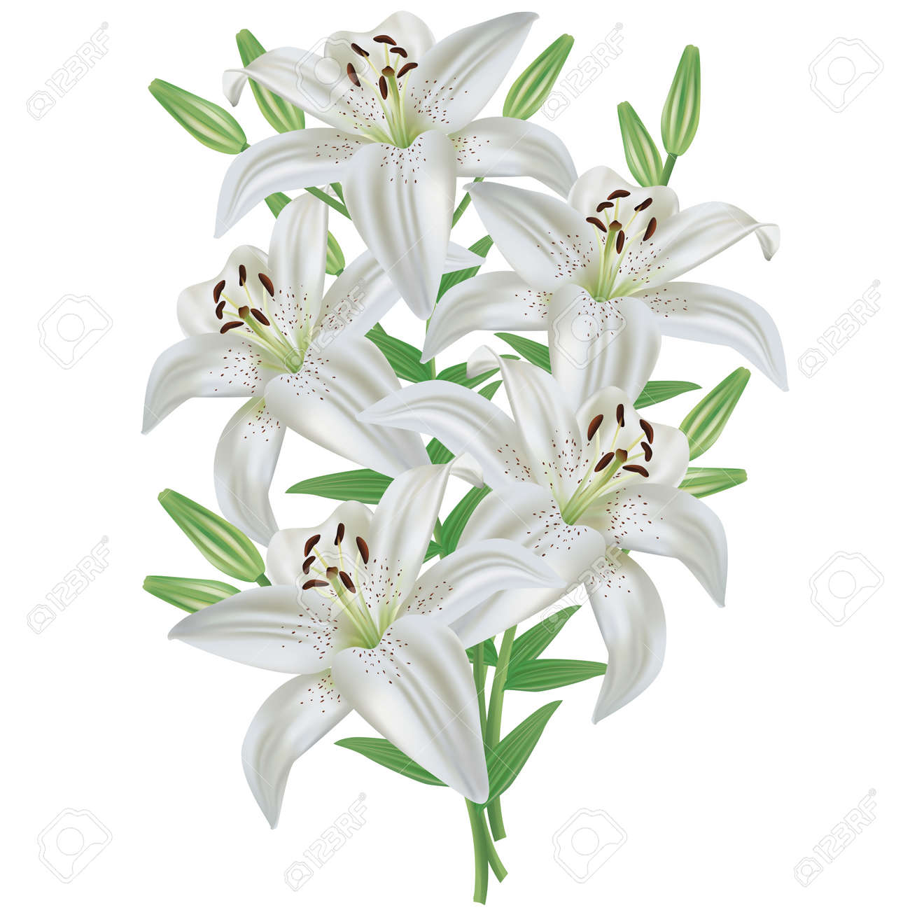 White Lily Flower Bouquet Realistic Isolated On White Background