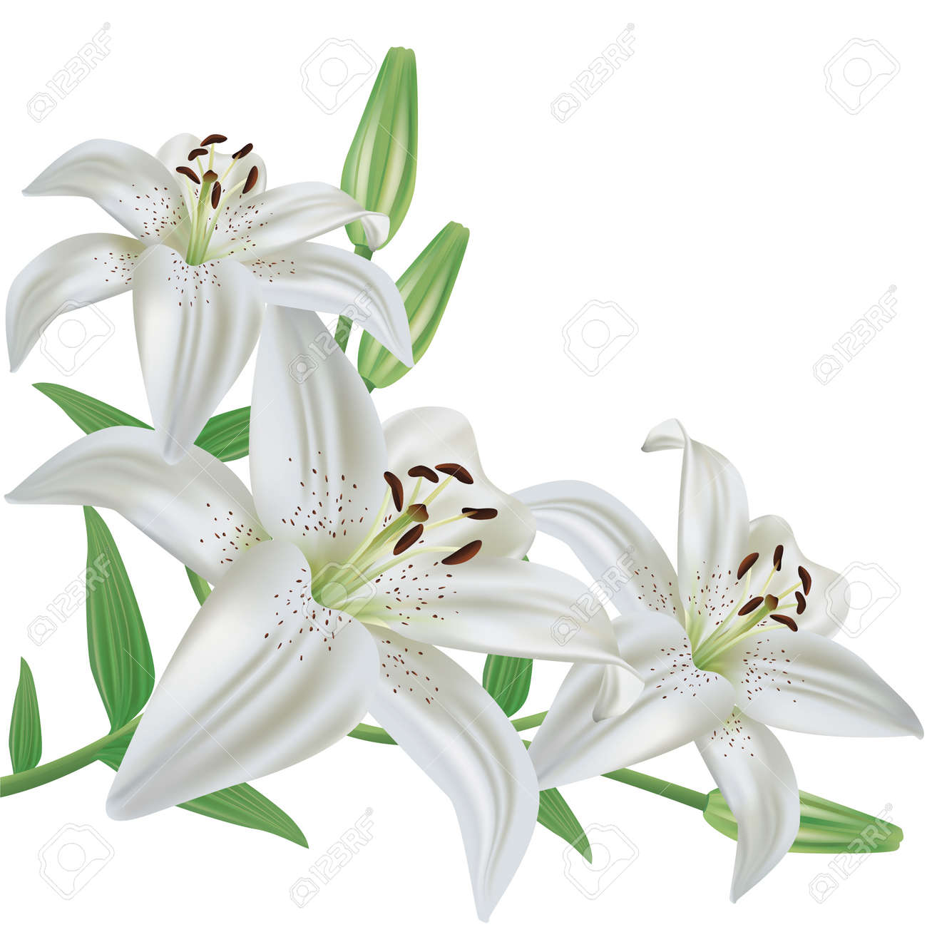 White lily flower bouquet realistic isolated on white background vector white lily flower bouquet realistic isolated on white background vector izmirmasajfo