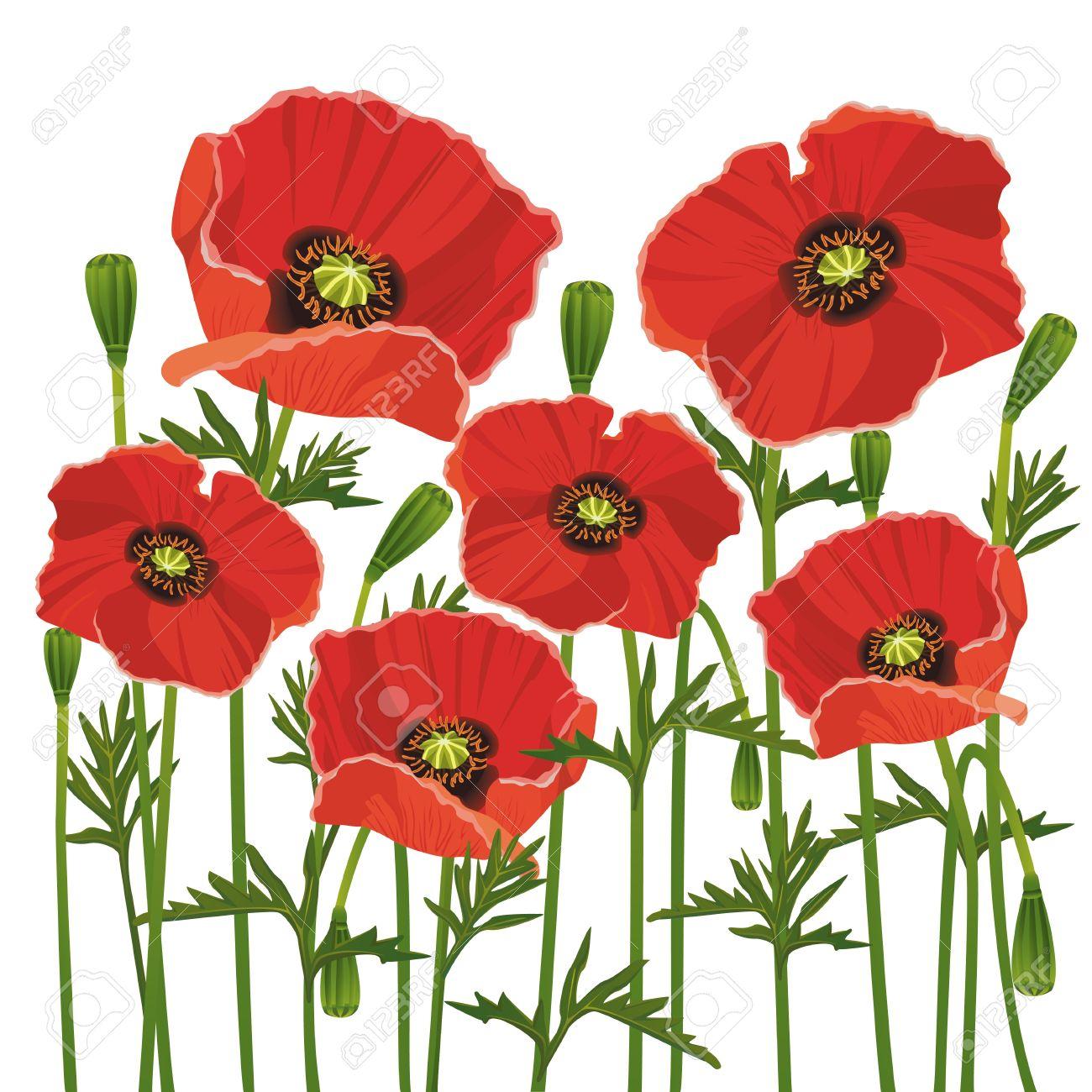 Цветы вектор красные