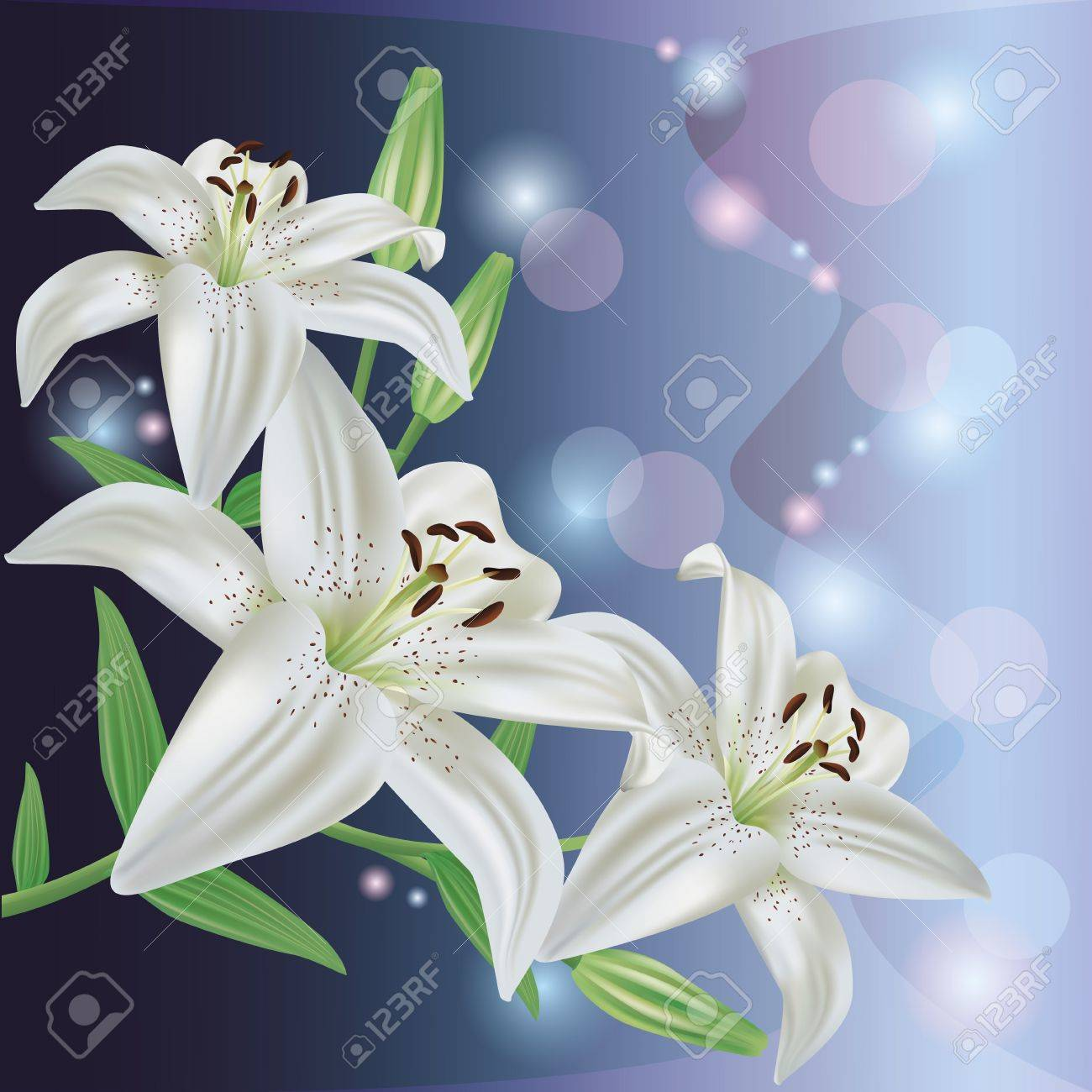 Greeting or invitation card with white lily flower.Glowing floral background, vector Stock Vector - 13131553