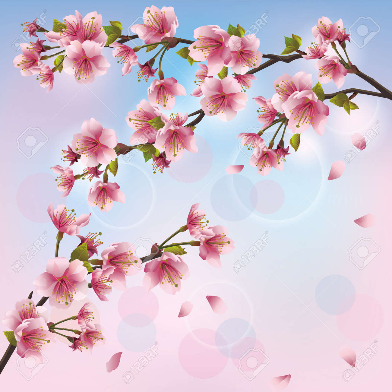 Light background with sakura blossom japanese cherry tree imagens light background with sakura blossom japanese cherry tree greeting or invitation card vector illustration stopboris