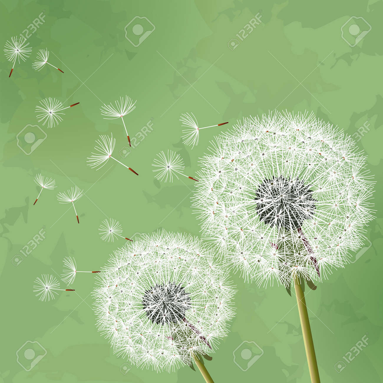 Floral vintage background - Floral Vintage Background Green With Two Flowers Dandelions Vector Illustration Stock Vector 19405500