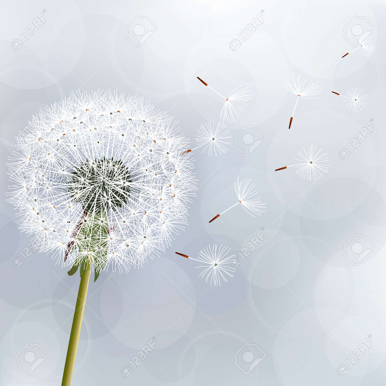 Floral trendy background with flower dandelion Beautiful nature wallpaper - 23241333