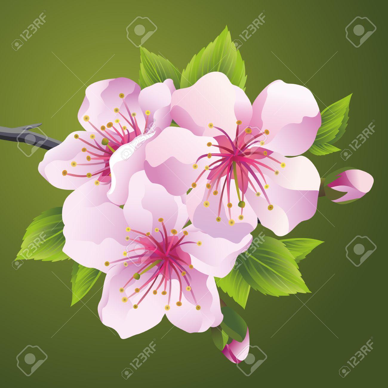 日本の桜さくらピンクの開花枝 美しい桜の花 緑の背景に分離されました スタイリッシュな花の壁紙 ベクトル イラストのイラスト素材 ベクタ Image