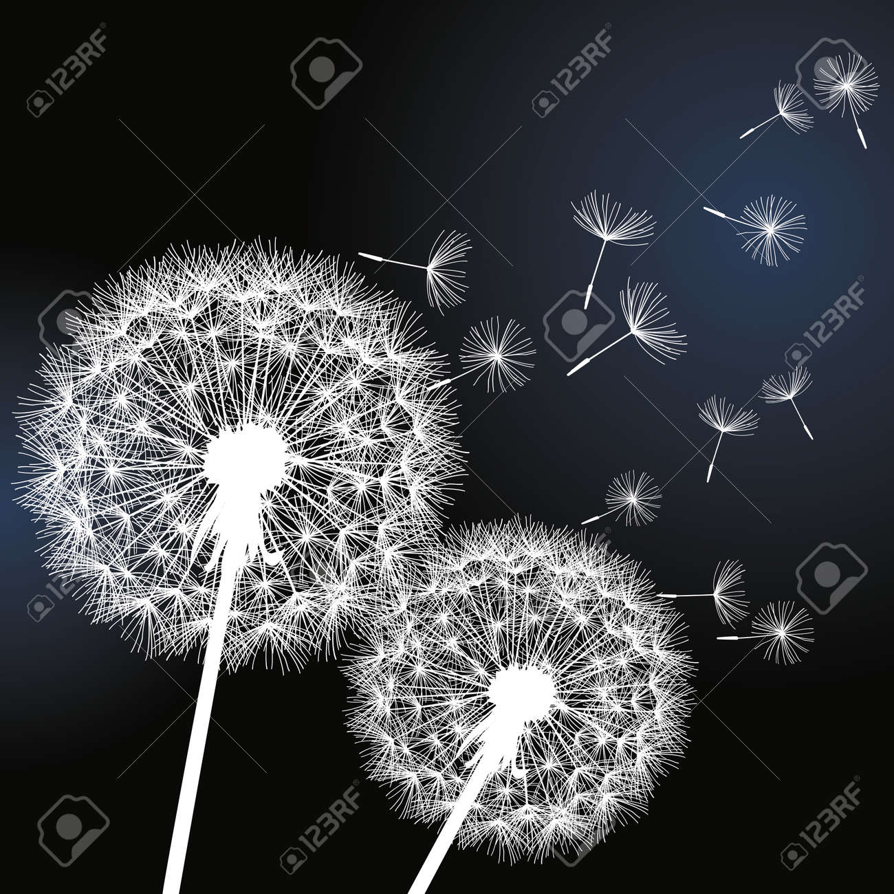 Good Wallpaper Black And White Romantic - 30404237-stylish-background-with-two-white-flowers-dandelions-on-black-background-beautiful-trendy-romantic-w  HD_85665.jpg