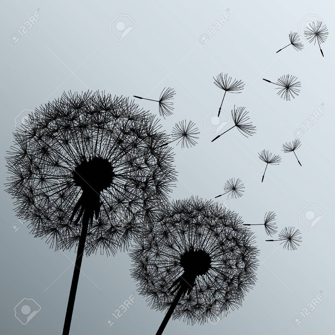 Stylish Background With Two Black Flowers Dandelions On Grey