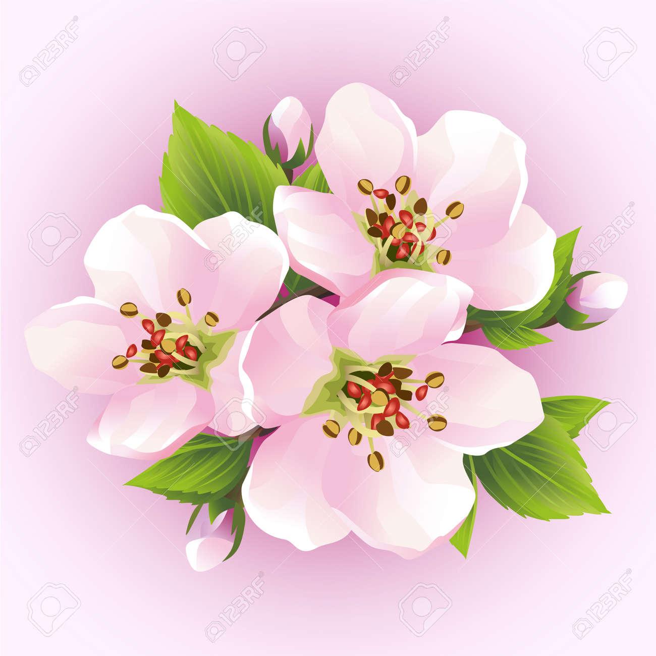 Cerisier Japonais Branche Floraison De Sakura Belle Fleur De
