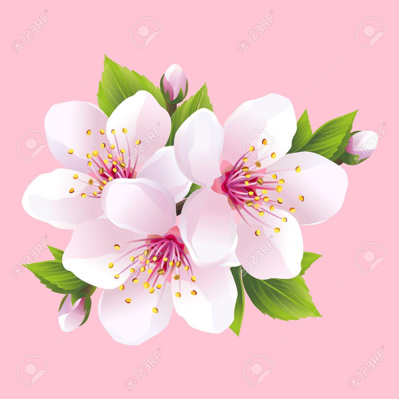 Direction Generale De La Floraison Blanche Sakura Cerisier Japonais