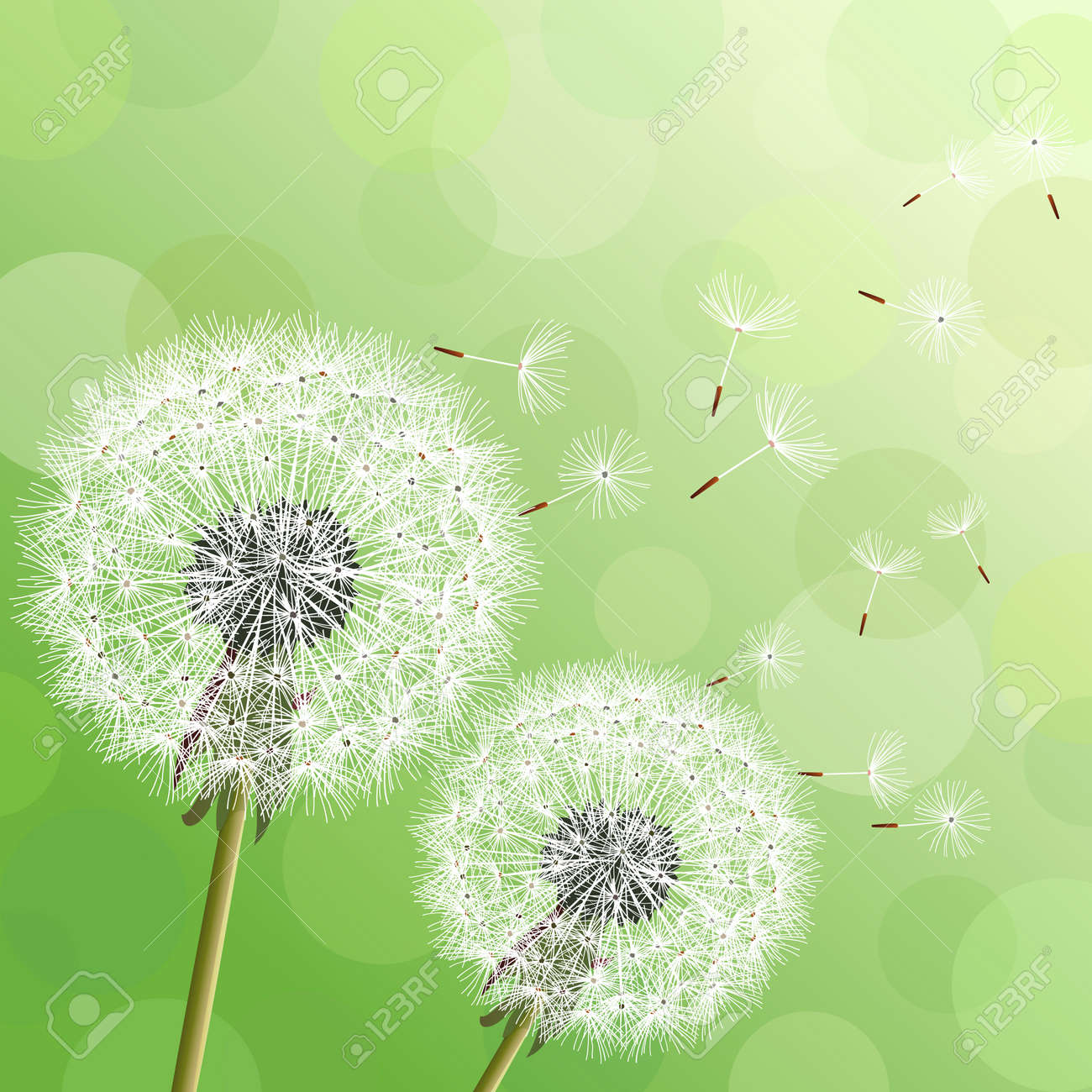 Floral 6x8 FT Backdrop Photographers,Cute Dandelion Flowers Nature Environment Fuzz Organic Fluff Artsy Illustration Background for Party Home Decor Outdoorsy Theme Vinyl Shoot Props Black White