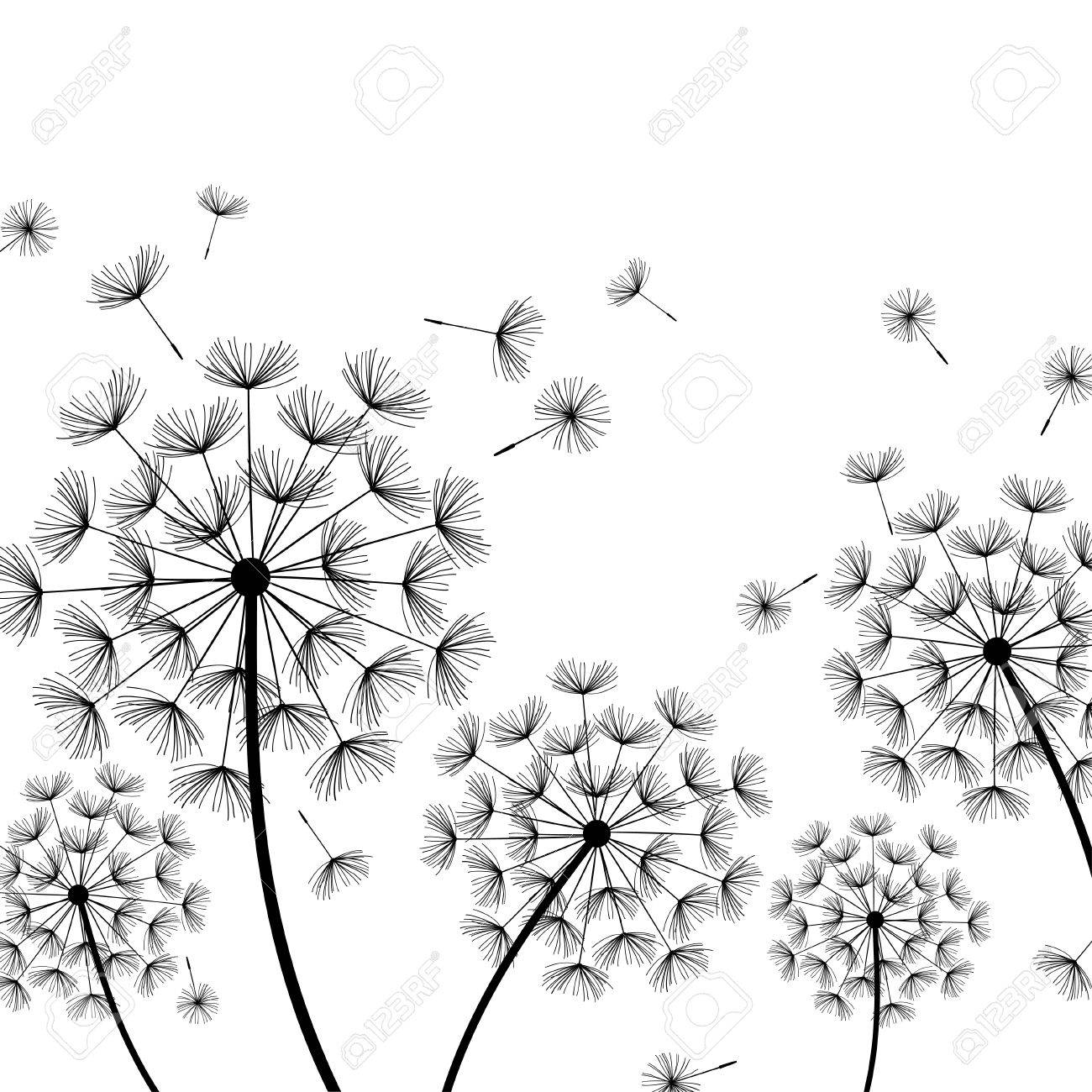 Beautiful Nature White Background With Black Dandelions And Flying Fluff Floral Stylish Trendy Wallpaper