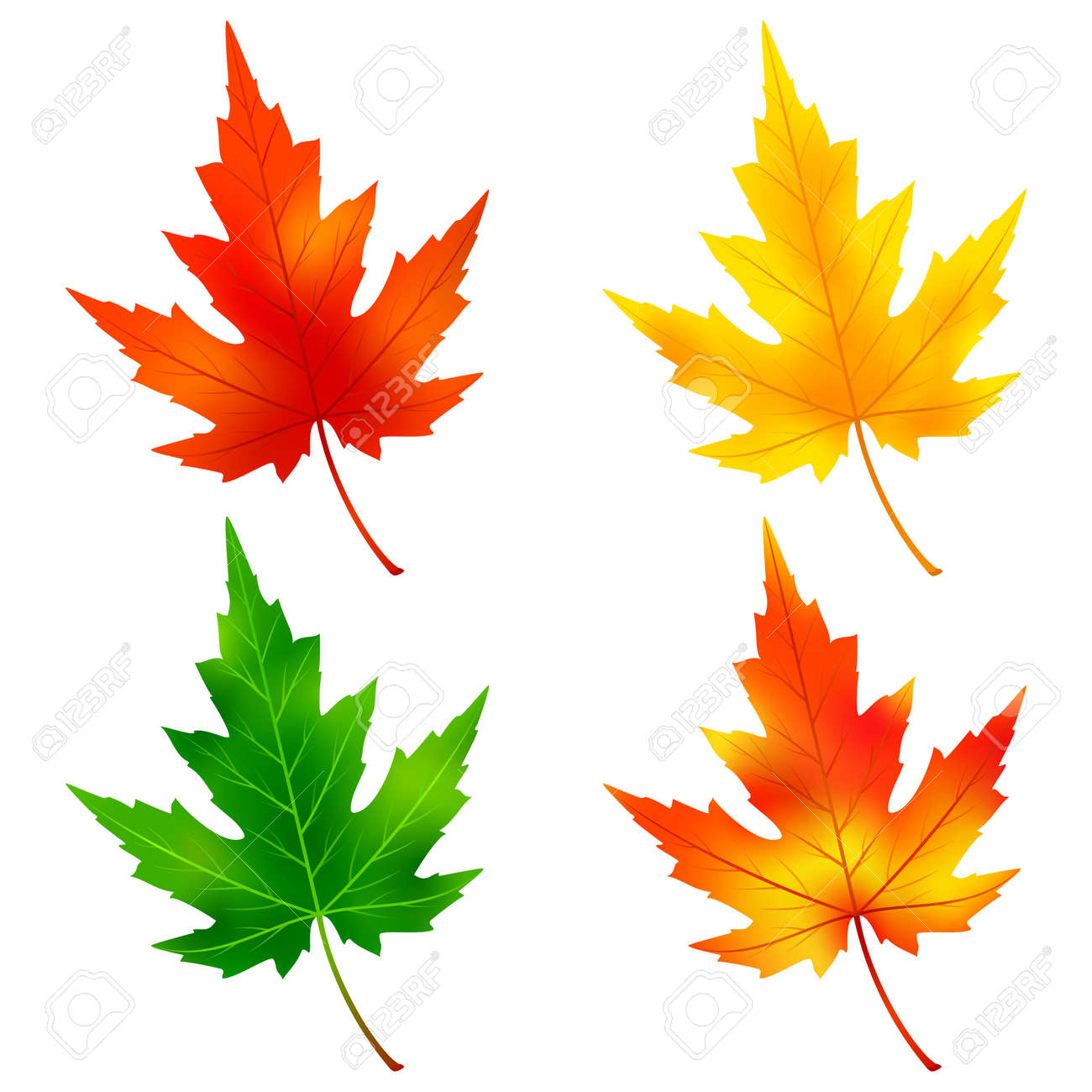 Set Of Different Colorful Autumn And Summer Maple Tree Leaves