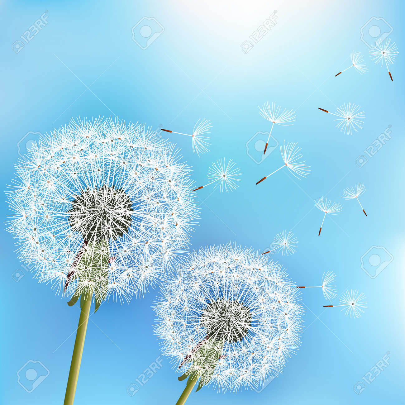 Stylish nature blue background with two flowers dandelions blowing seeds. Trendy floral spring or summer wallpaper. Vector illustration - 82449935