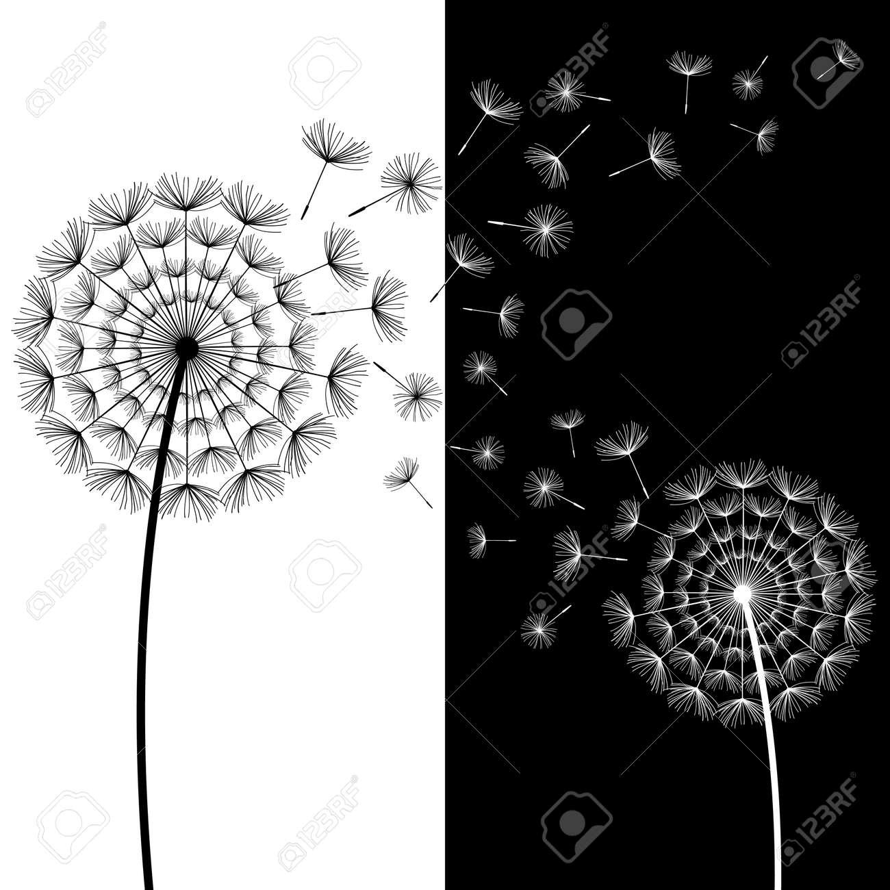Beau Fond Abstrait Avec Deux Pissenlits Stylises Noir Et Blanc