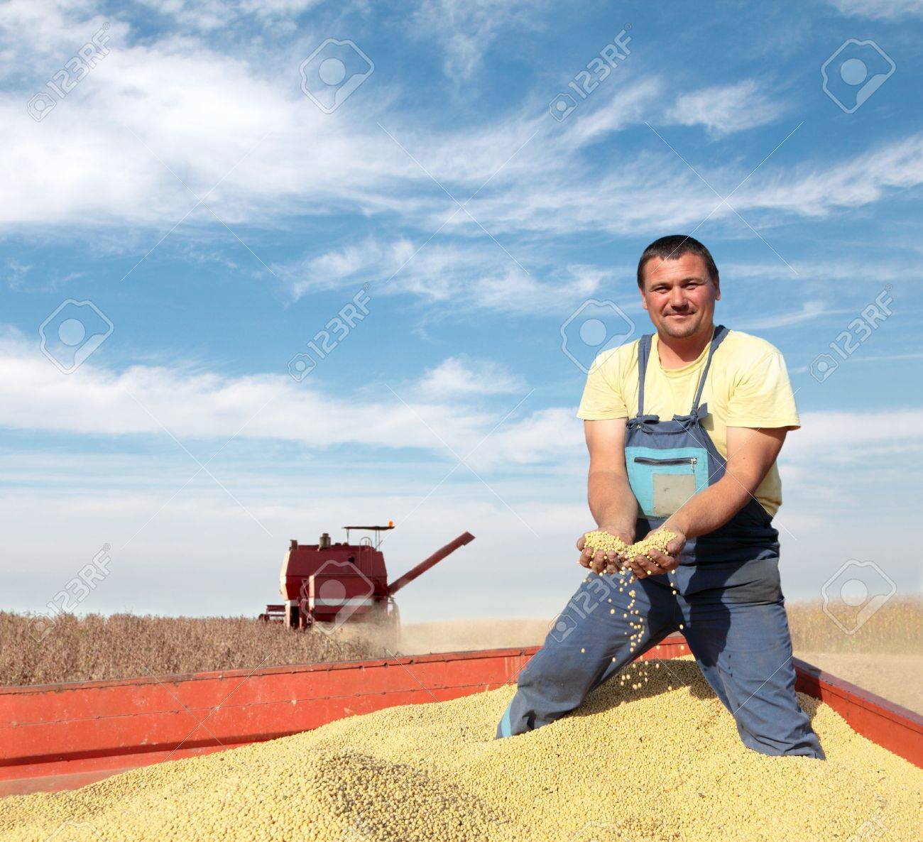 Harvesting of soy bean field with combine Stock Photo - 13988049