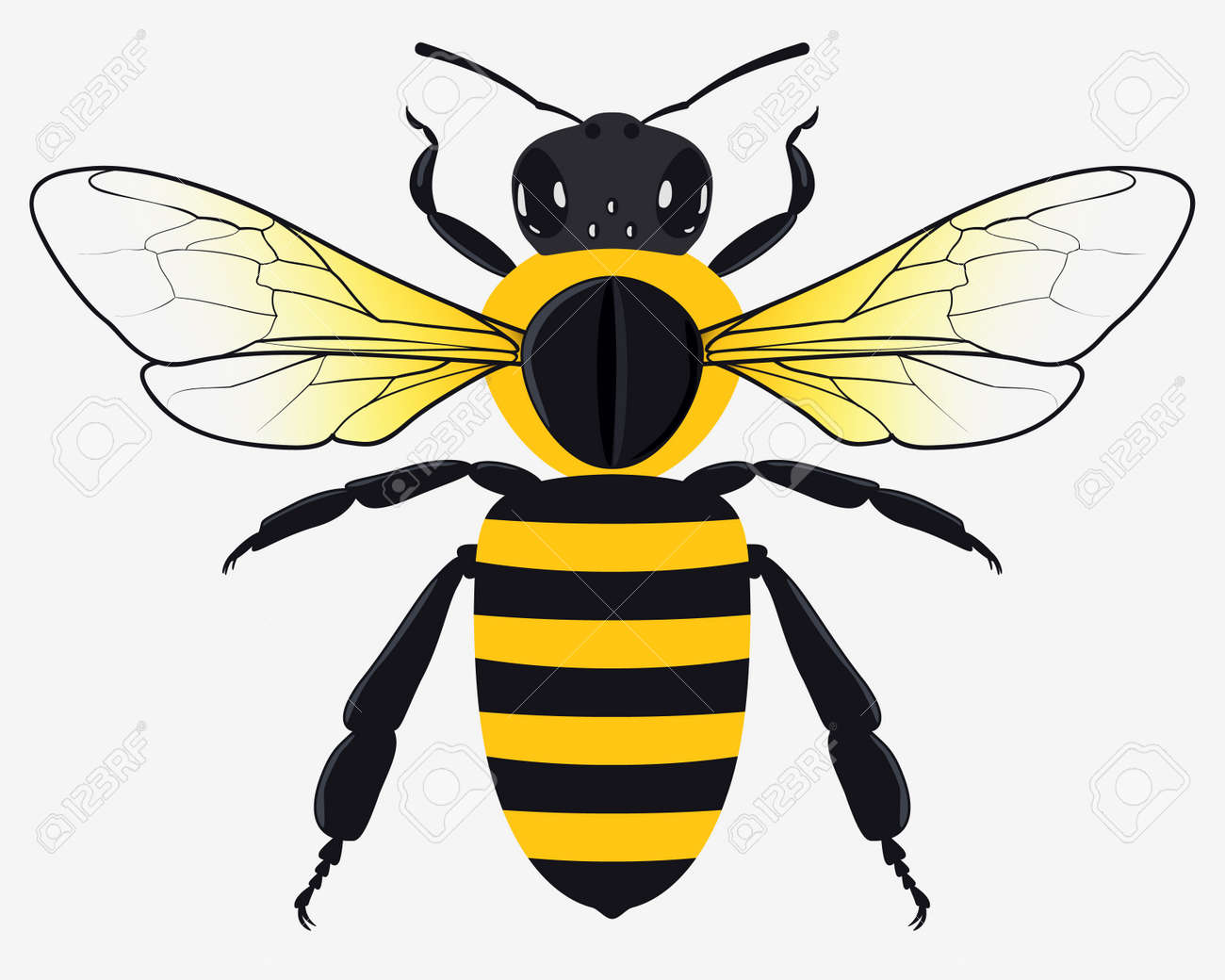 detailed honey bee vector illustration isolated on white royalty rh 123rf com bee vector free bee vector disease