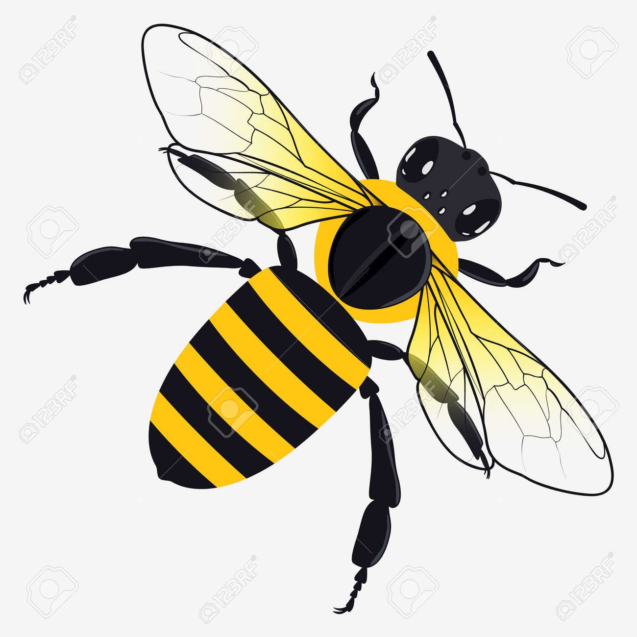 detailed honey bee vector illustration isolated on white royalty rh 123rf com bee vector image bee vector drawing
