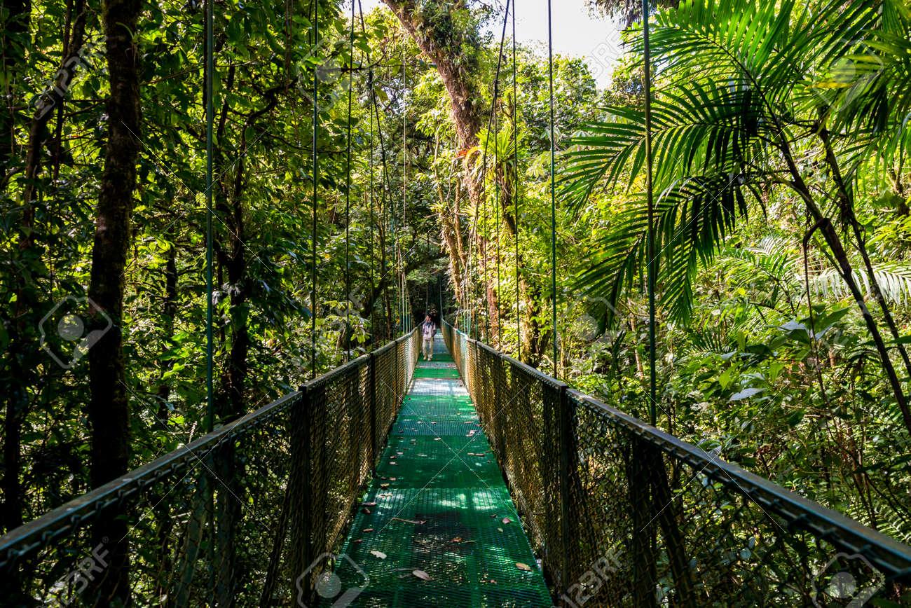 Hanging Bridges in Cloudforest - Monteverde, Costa Rica - 83337303