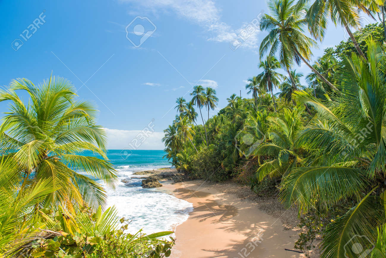 Wild caribbean beach of Manzanillo at Puerto Viejo, Costa Rica - 83358963