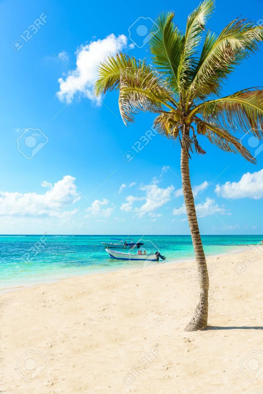 Akumal beach - paradise bay Beach in Quintana Roo, Mexico - caribbean coast - 83525786