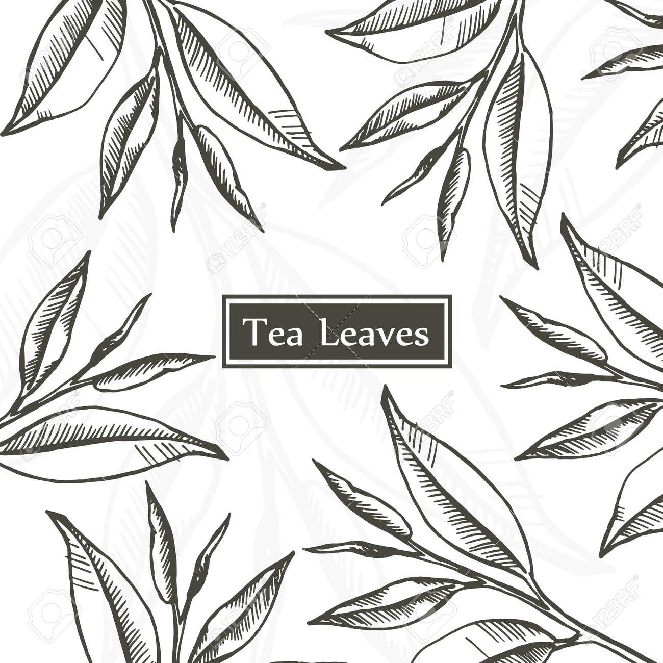 Tea Leaves Organic Green White And Black Design Template Hand Drawn