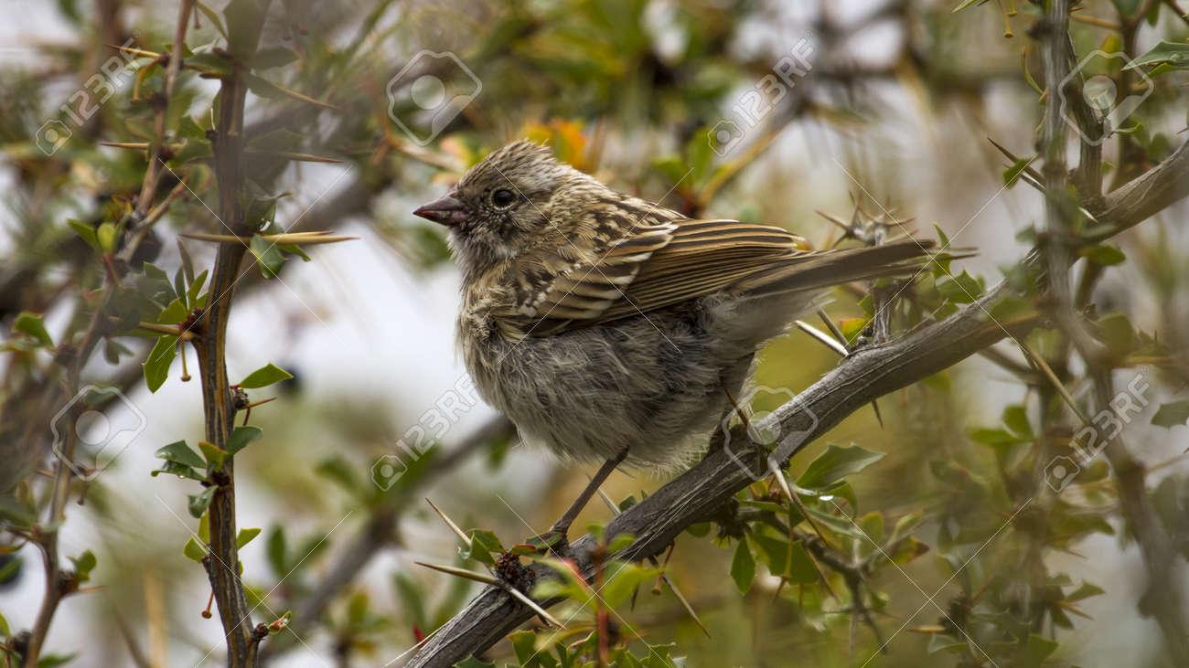 Small little cute bird on a