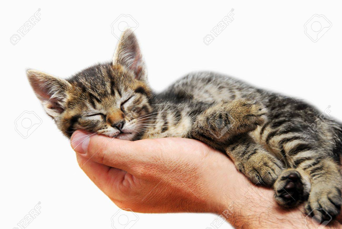 little baby cat sleeping in male arms isolated over white background - 10073114