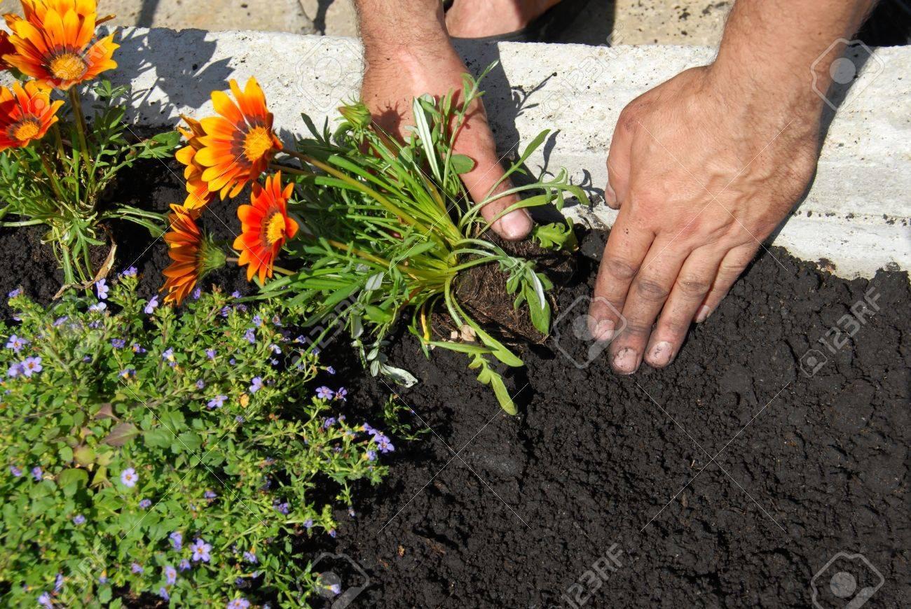 Planting flowers - 10518453