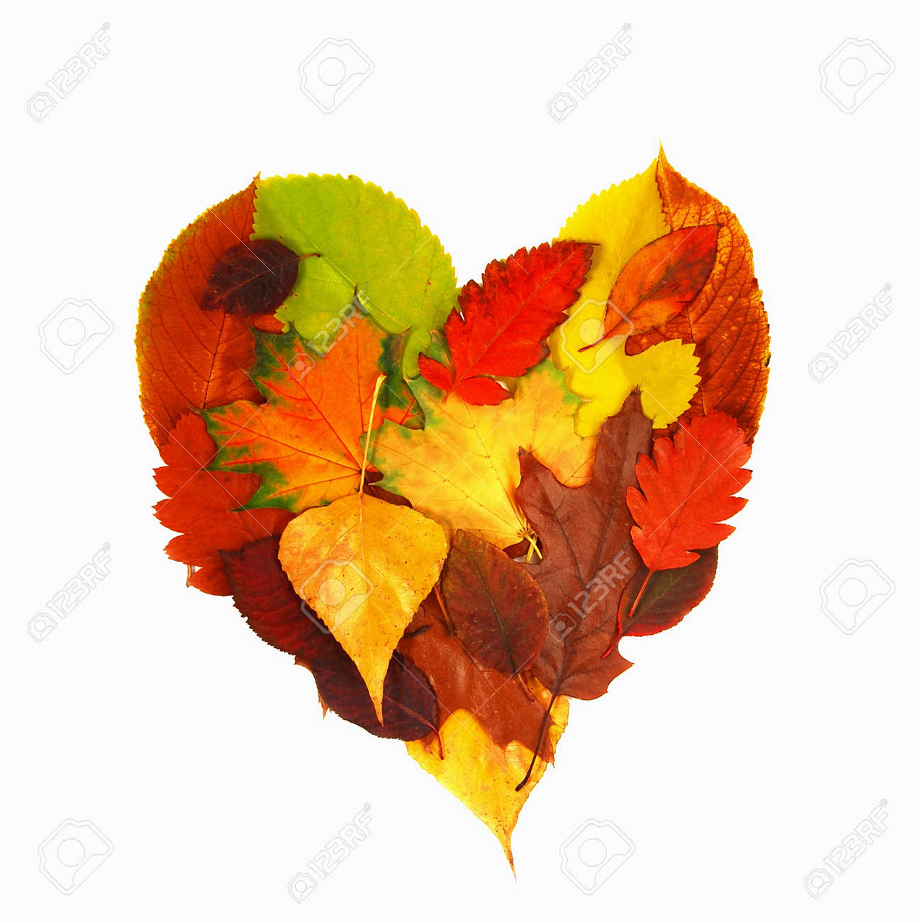 various bright colorful autumn tree leaves in heart shape over white background - 14351692