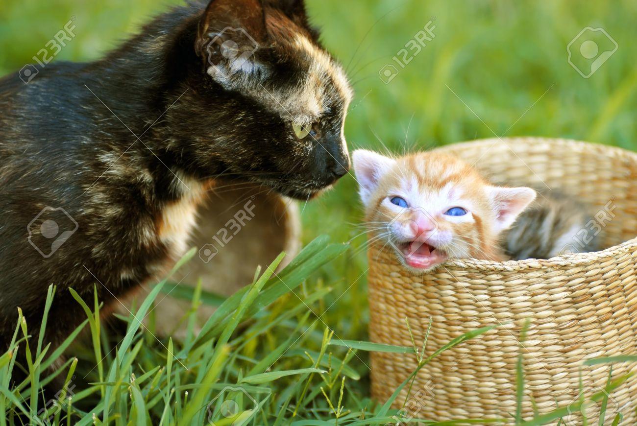 Black Tortoiseshell Cat Mother And Her Orange Baby Kitten Peeking