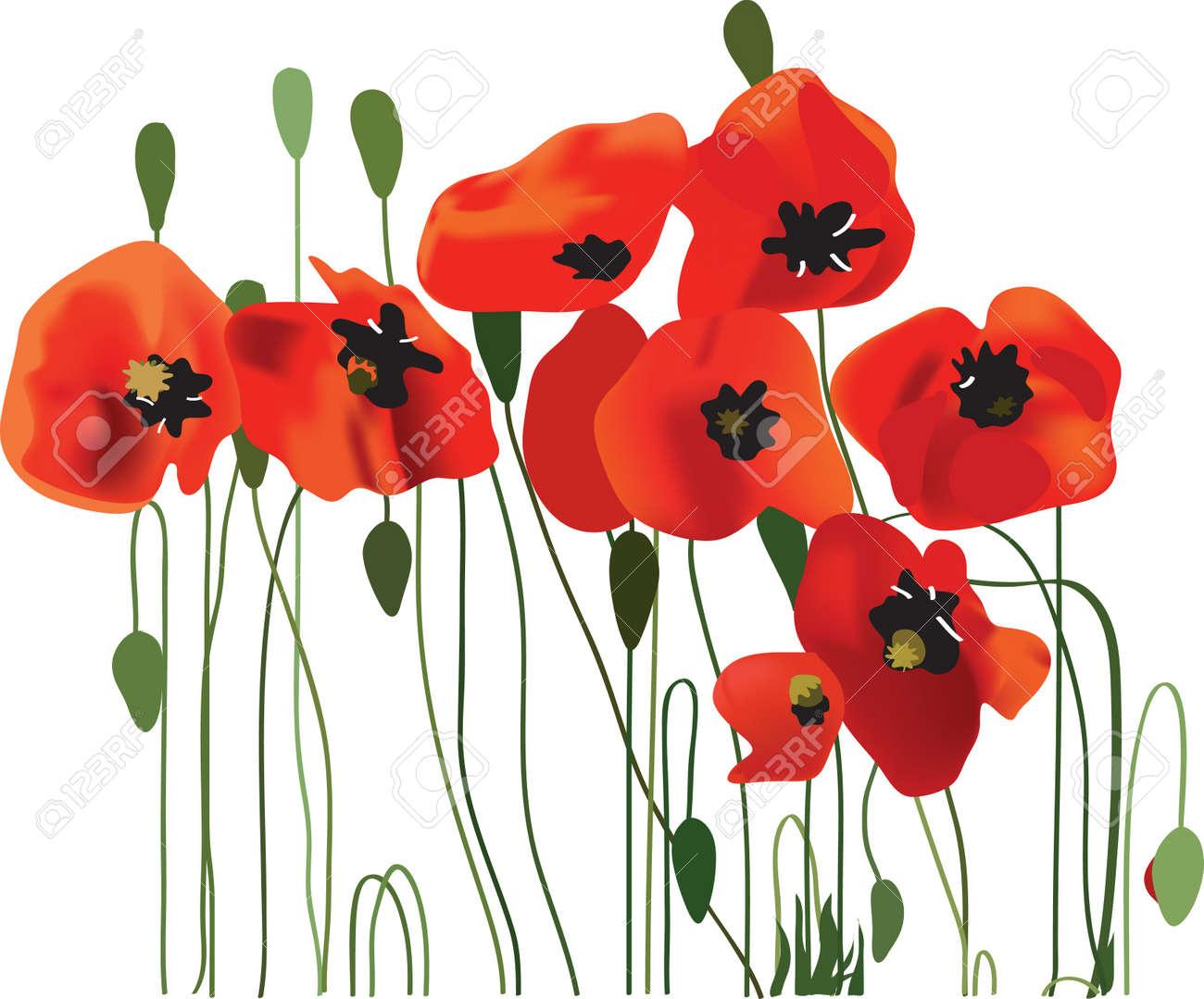 poppy flowers vector art Stock Vector - 10884548
