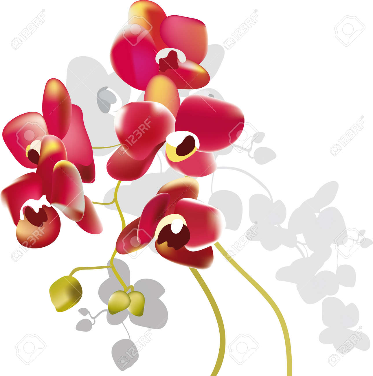 red orchid flowers Stock Vector - 11784876