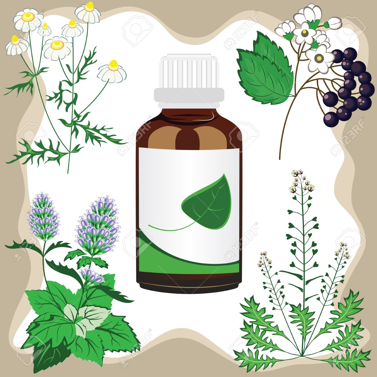 medicinal herbs  with bottle illustration Stock Vector - 13483411