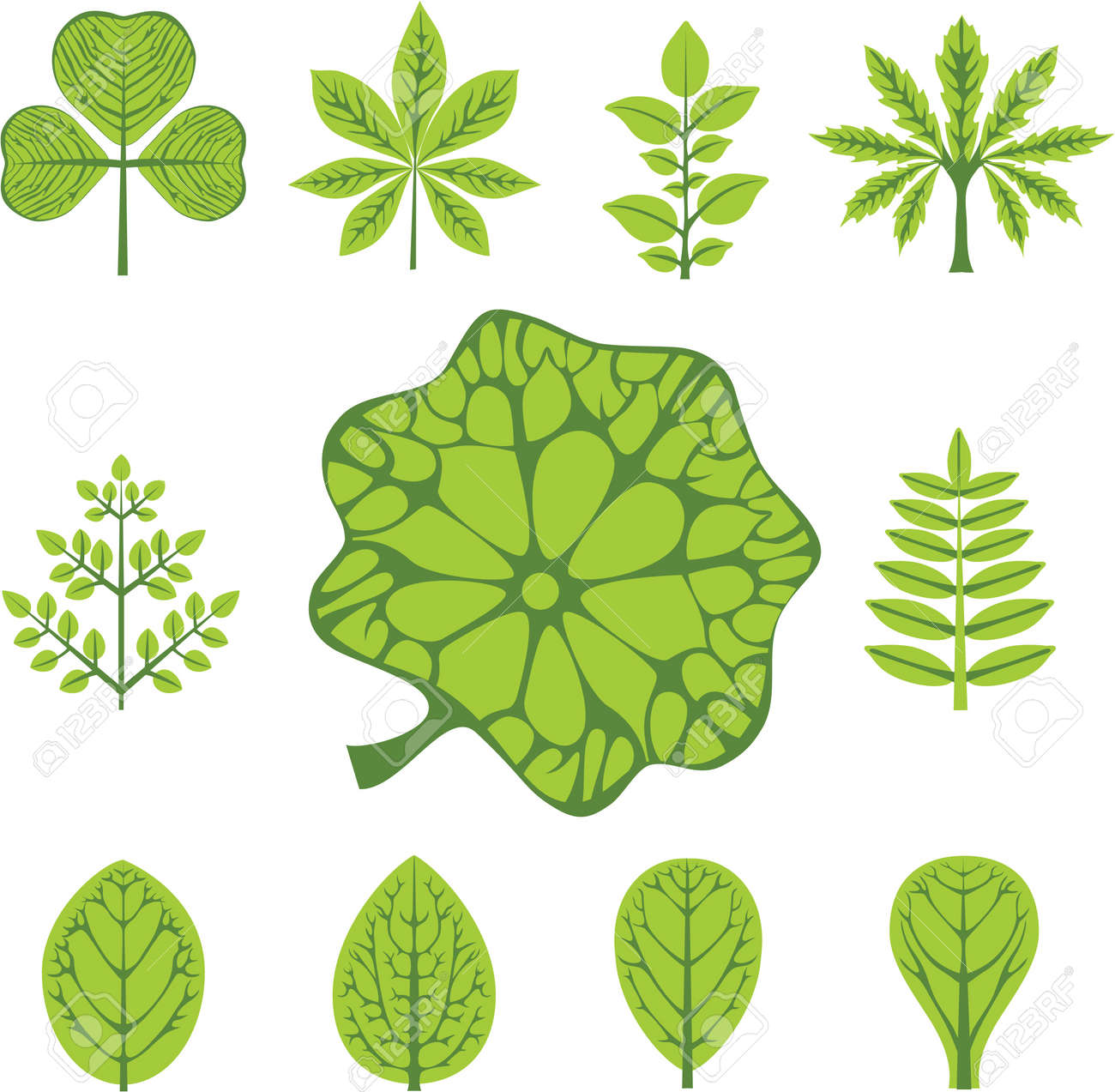 different types of leaves - 14119580