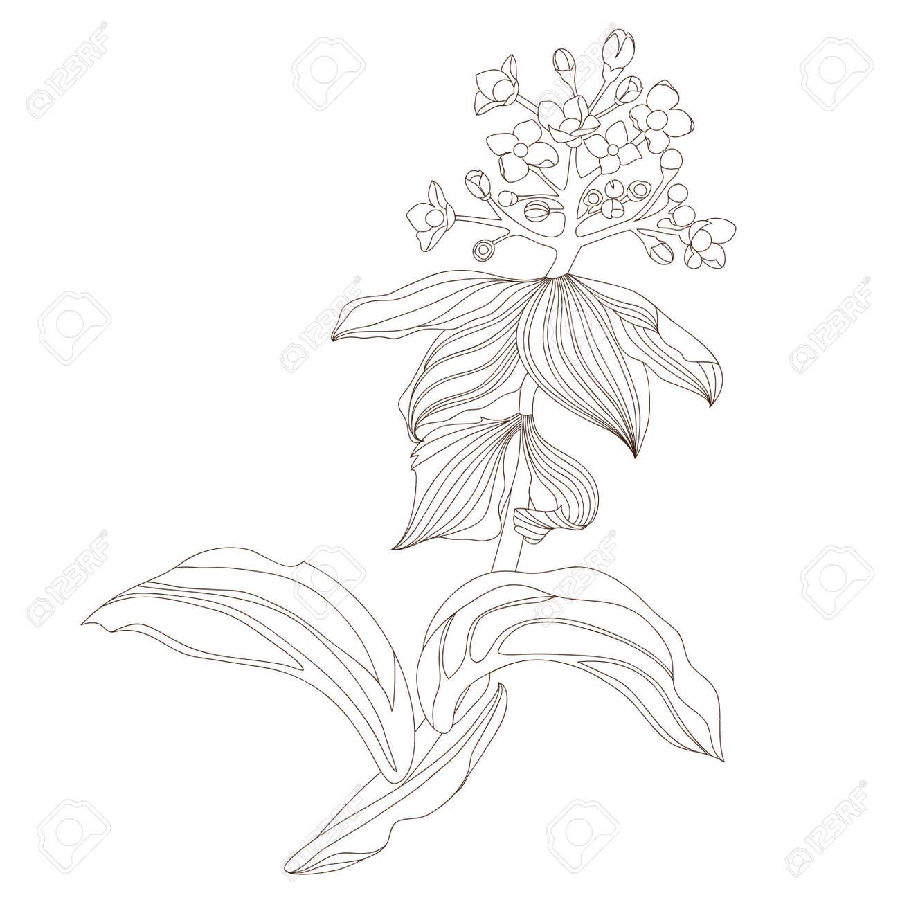 花デザインイラストのイラスト素材ベクタ Image 17071861
