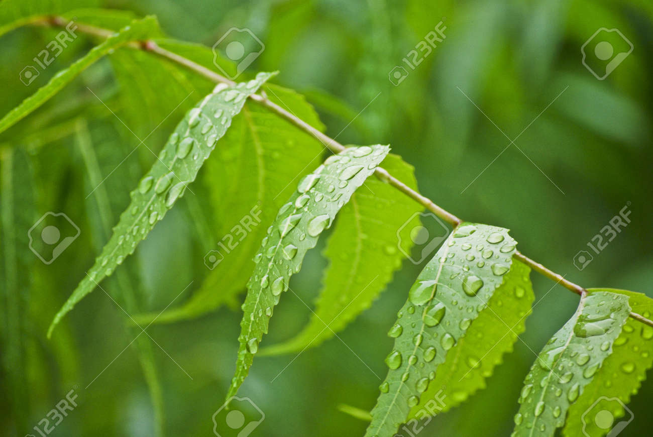 Leaves Stock Photo - 7895756