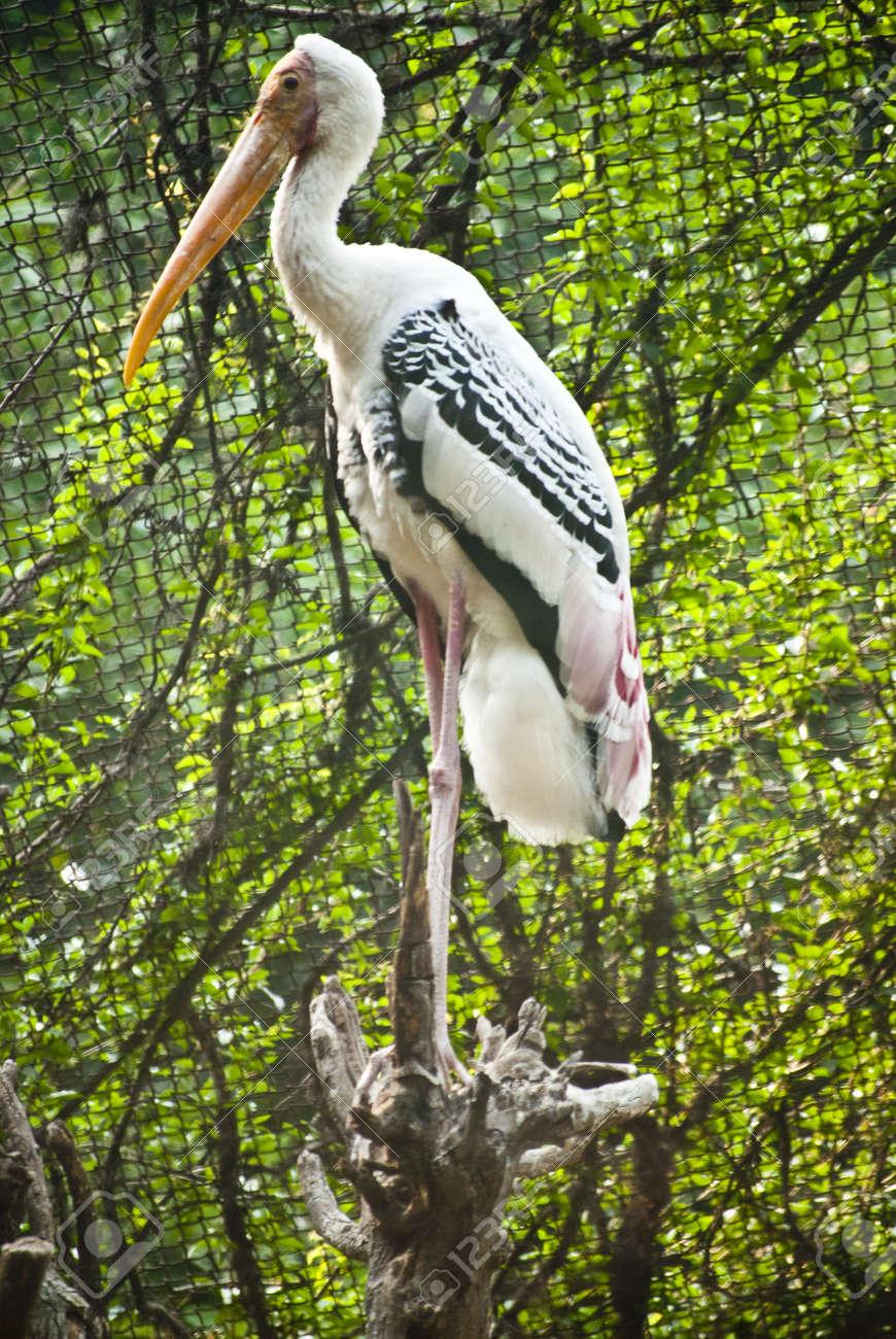 Bird Stock Photo - 9190166