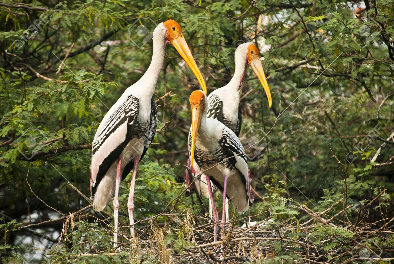 Bird Stock Photo - 9190164