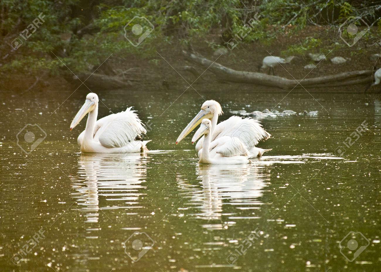 Birds Stock Photo - 9190162